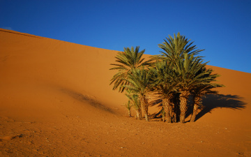 Картинка oasis природа пустыни пустыня песок пальмы