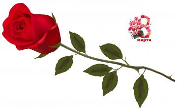 обоя праздничные, международный женский день - 8 марта, фон, роза, цветы