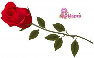 обоя праздничные, международный женский день - 8 марта, роза, фон, цветы