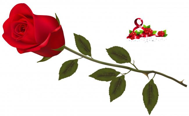 Обои картинки фото праздничные, международный женский день - 8 марта, фон, цветы, роза