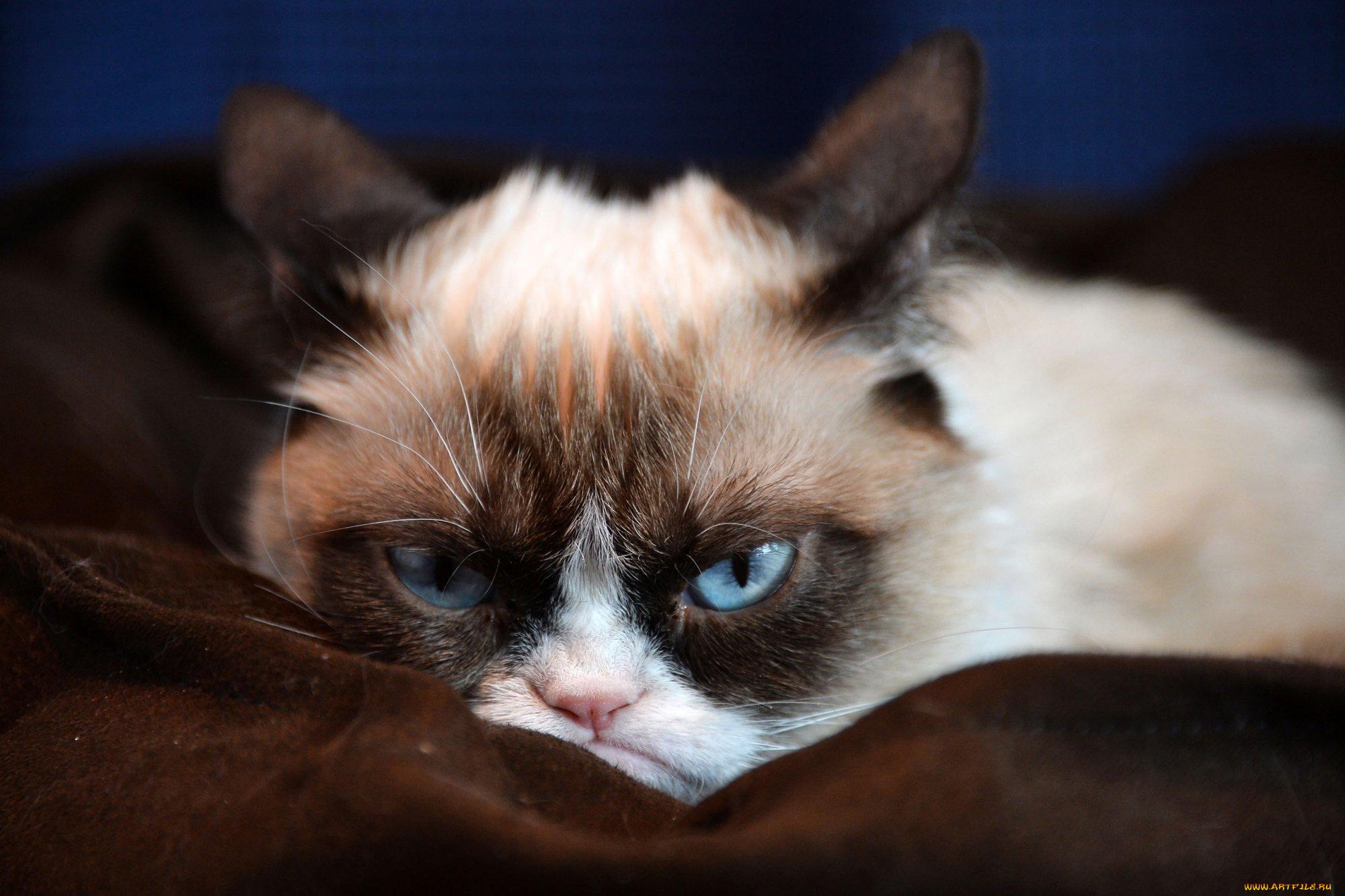 Днем, смешная картинка злой кот