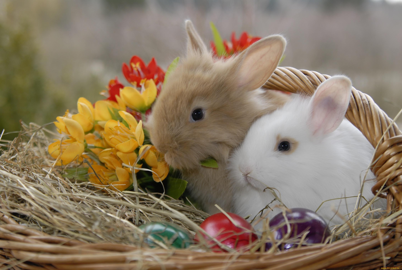 природа животные ккартинки зайцы цветы скачать