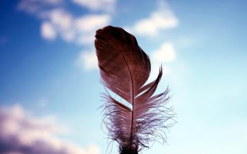 обоя разное, перья, перышко, боке