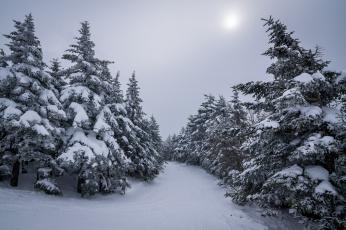 Картинка природа зима ели снег