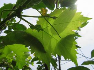 Картинка природа листья