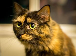 Картинка животные коты морда