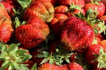 обоя еда, клубника,  земляника, витамины, ягоды, сад, дача, июнь, лето, вкусно