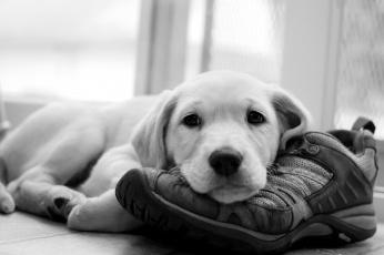 Картинка животные собаки щенок