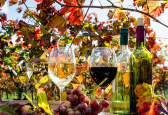 Картинка еда напитки +вино вино бокал виноградники виноград