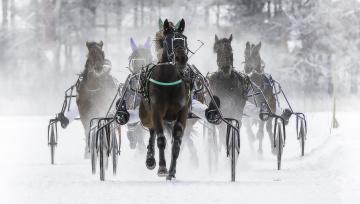 обоя спорт, конный спорт, бега