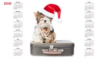 обоя календари, животные, белый, фон, шапка, собака