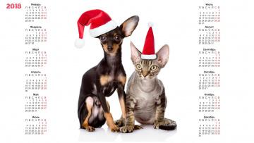 обоя календари, животные, кошка, шапка, собака
