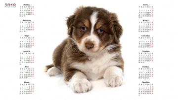 обоя календари, животные, собака