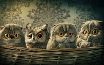 обоя рисованное, животные, совы, кот