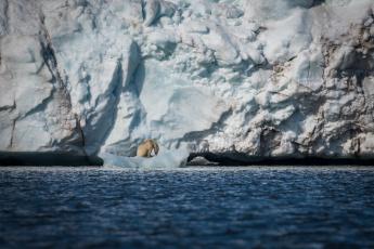 обоя животные, медведи, льдины, море, айсберг, снег, лёд, хищник, полярный, белый