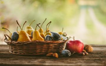 обоя еда, фрукты,  ягоды, груши, яблоки, сливы, орехи, натюрморт