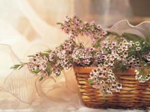 Картинка цветы цветущие деревья кустарники