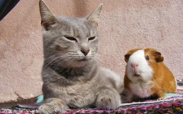 Картинка животные разные вместе