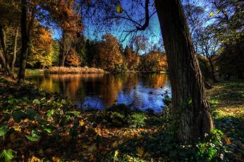 Картинка ujazdоw+park+варшава природа реки озера парк озеро лес
