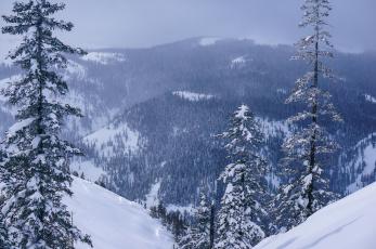 Картинка природа горы лес снег зима россия хабаровский край панорама деревья