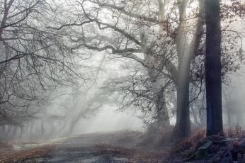 обоя природа, лес, деревья, снег
