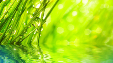 обоя природа, макро, капли, трава, вода