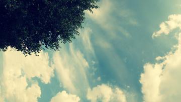 обоя природа, облака, дерево, небо