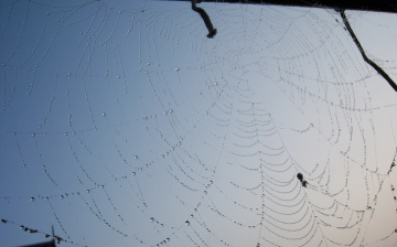 Картинка природа макро паутина роса небо утро капли