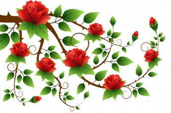 обоя векторная графика, цветы , flowers, розы