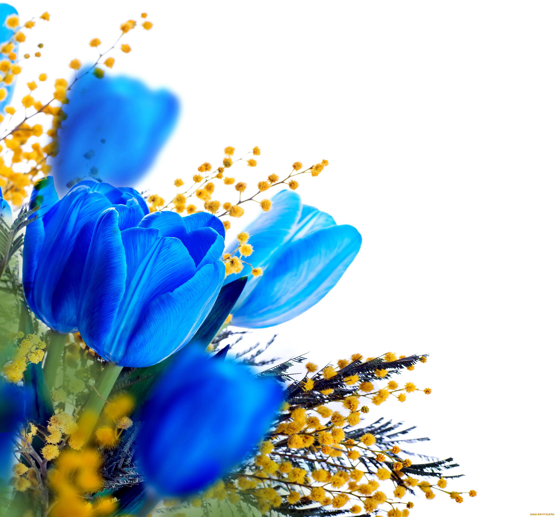 Тюльпан и мимоза открытка