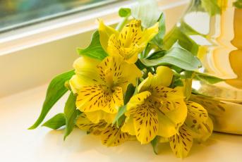 обоя цветы, альстромерия, макро, желтый