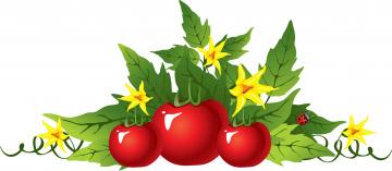 Картинка векторная+графика еда+ food листья помидор цветы фон божья коровка