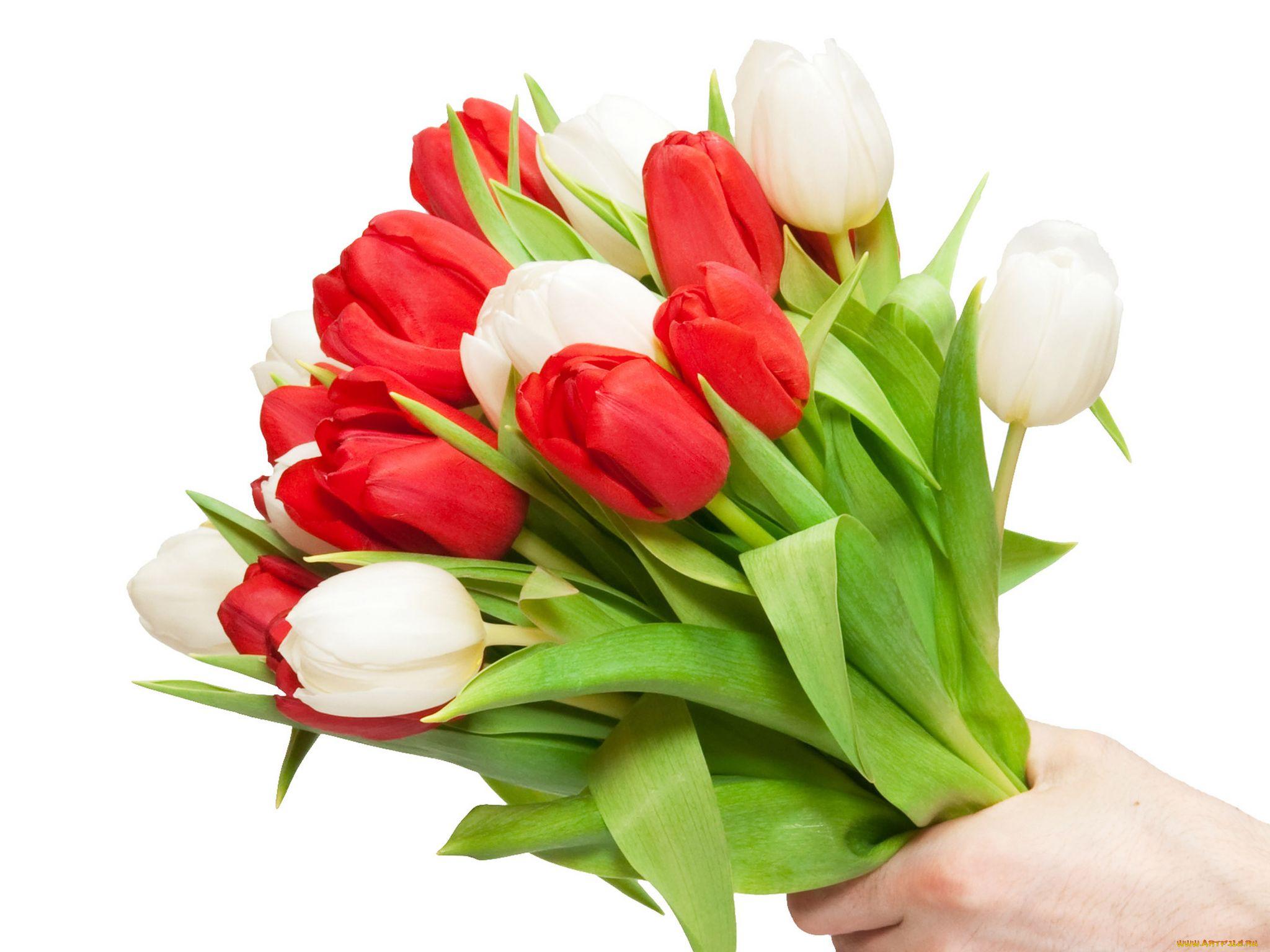 Открытки для любимой с тюльпанами