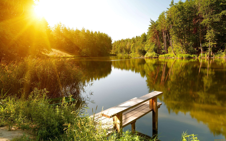 Лето фото красивые природа лес, днем рождения