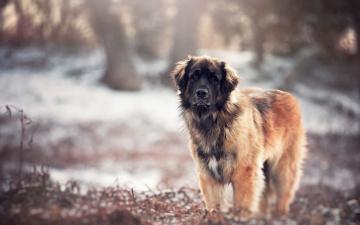 Картинка животные собаки собака взгляд друг