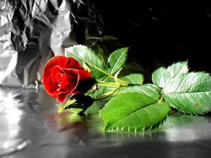 обоя цветы, розы, фольга, красная, роза