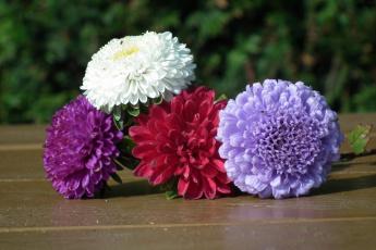 обоя цветы, астры, розовый, белый, лиловый