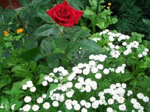 Картинка цветы разные вместе