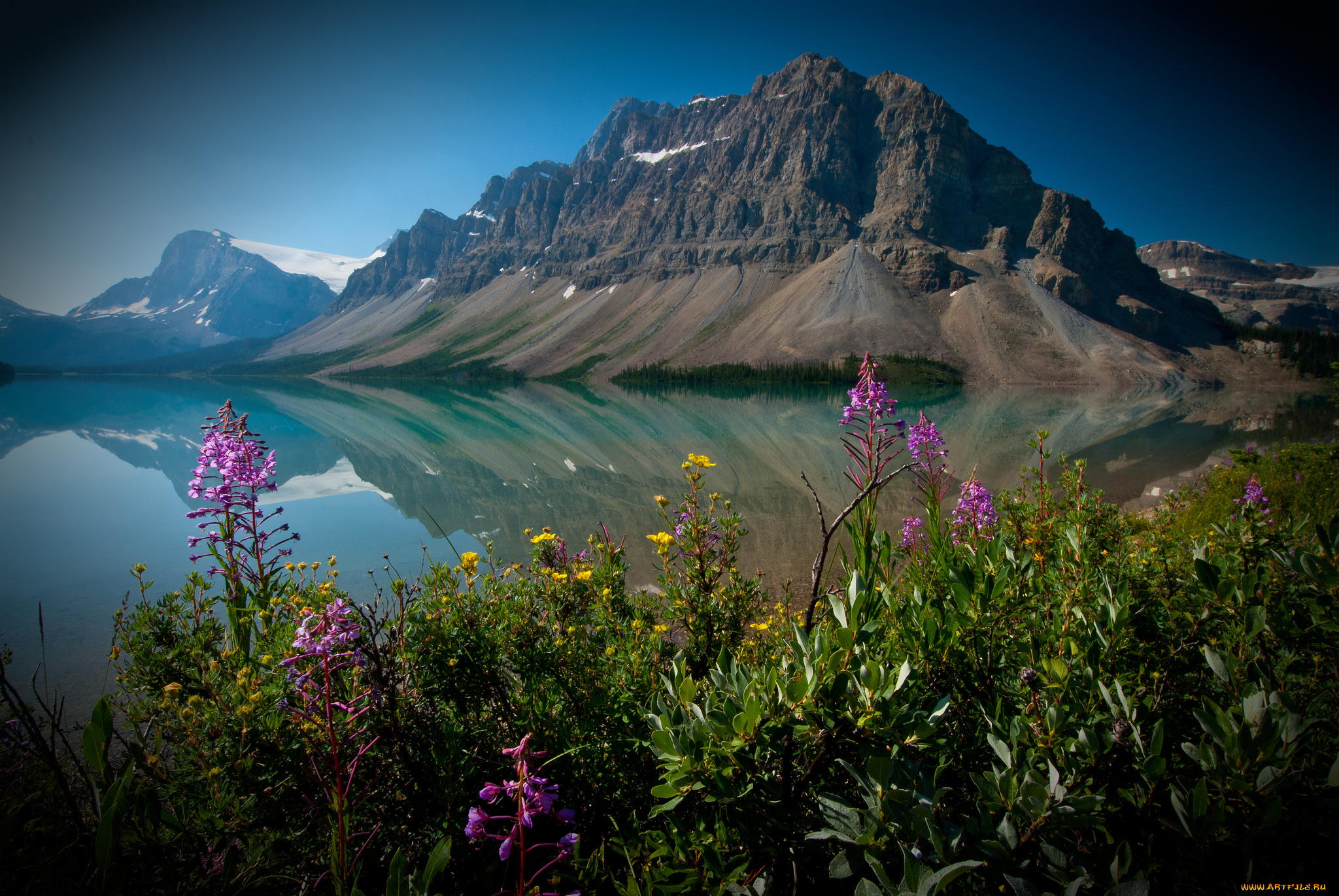 Bow Lake and Flowers, Banff National Park, Alberta, Canada  № 230862 бесплатно