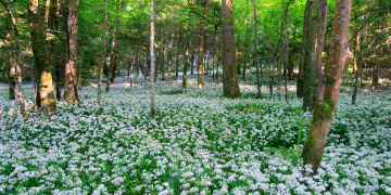 Картинка ireland природа лес цветы деревья ирландия