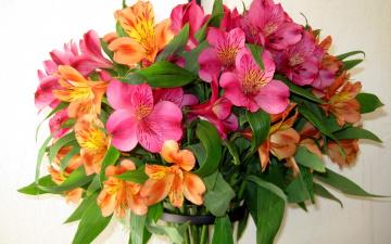 обоя цветы, альстромерия, букет