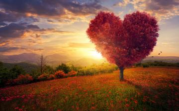 обоя разное, компьютерный дизайн, поле, небо, трава, любовь, цветы, дерево, сердце, love, field, landscape, heart, pink, blossom, flowers, beautiful, tree, romantic