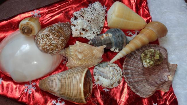 Обои картинки фото разное, ракушки,  кораллы,  декоративные и spa-камни