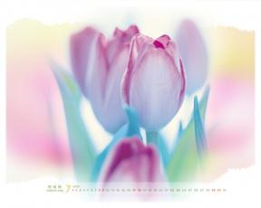 обоя календари, цветы