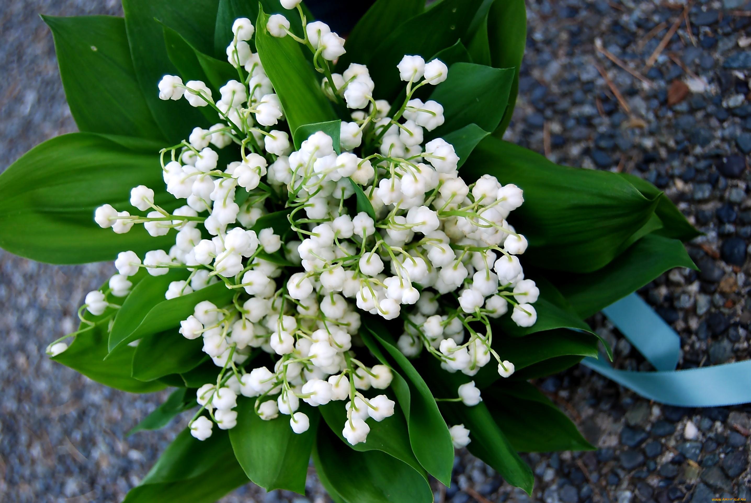 Картинки для ватсапа цветы ландыши