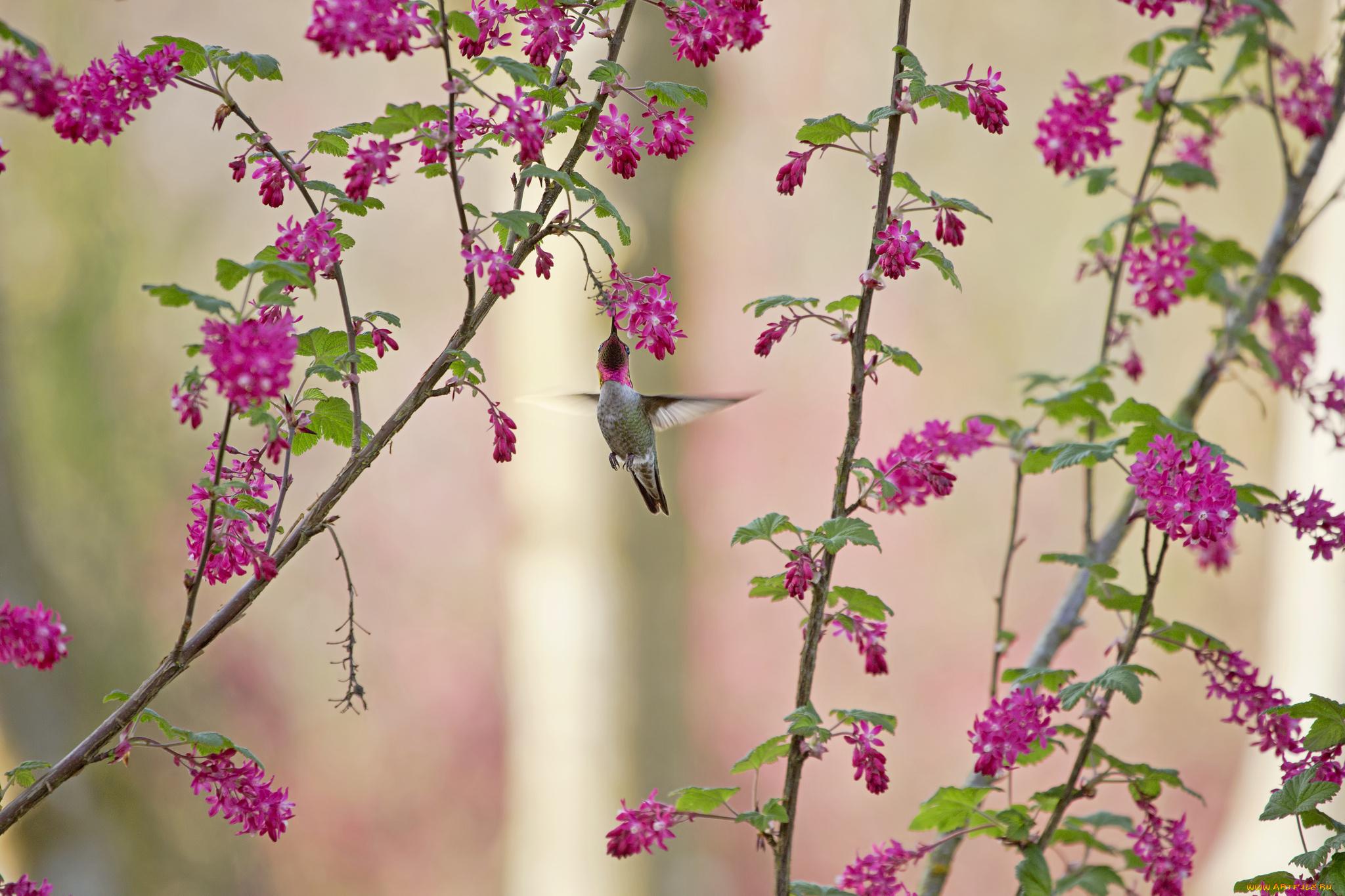 птица природа ветка колибри  № 1994267 без смс