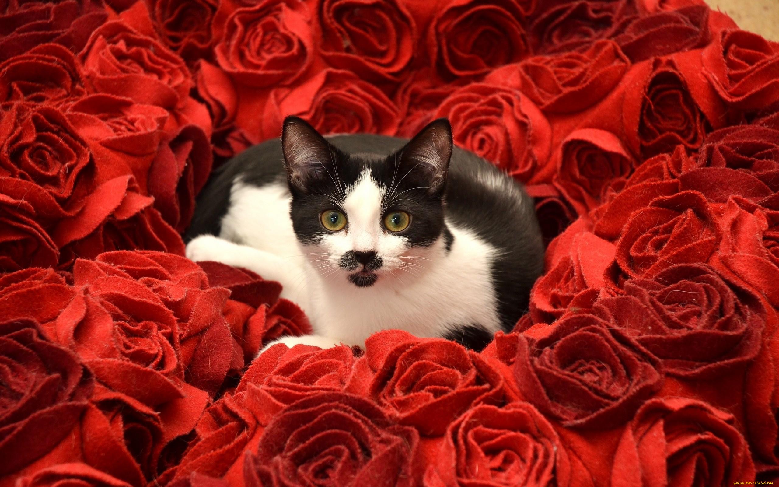 Красивые открытки котики и розы