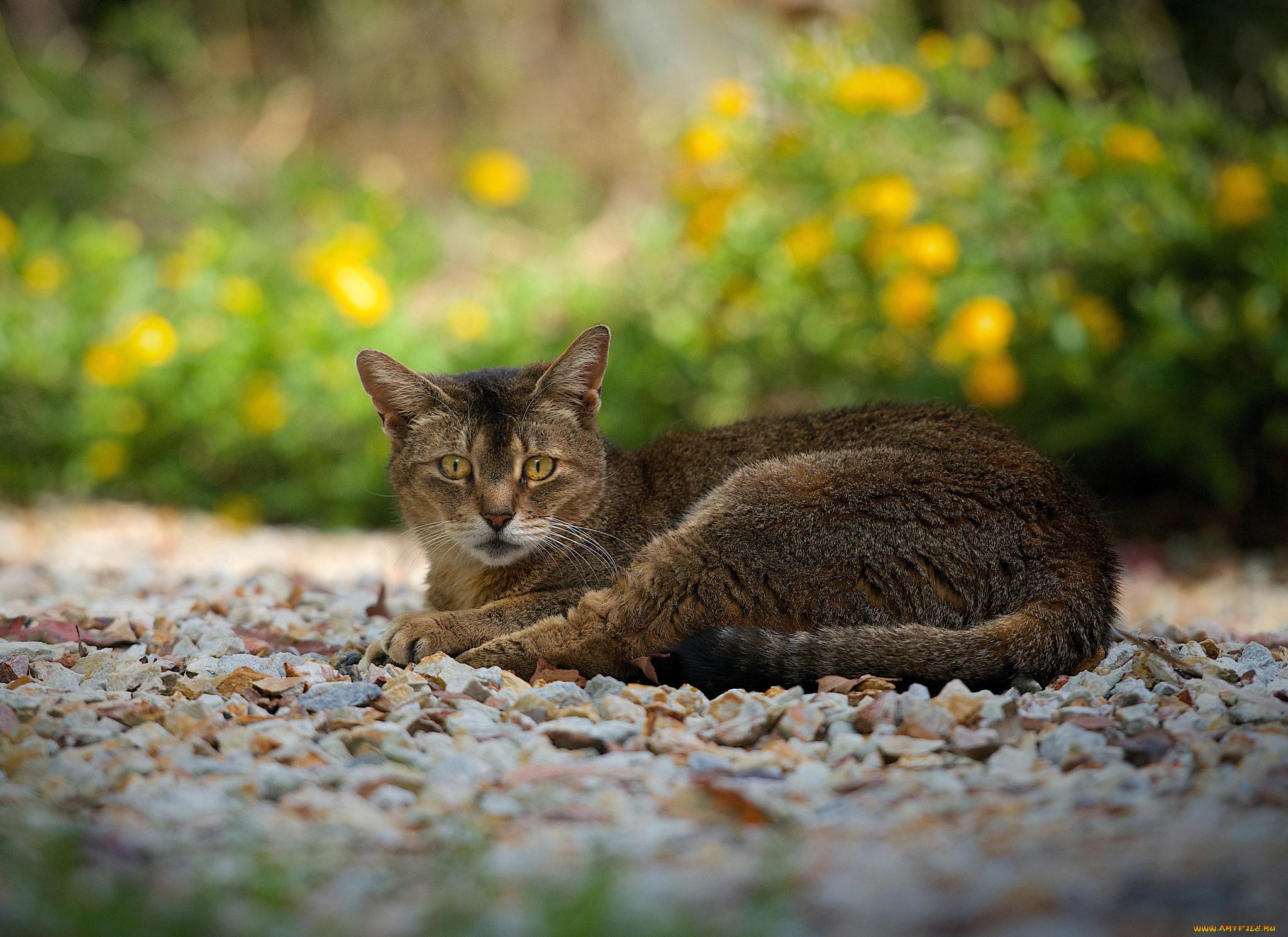 Кот на камушках  № 530540  скачать