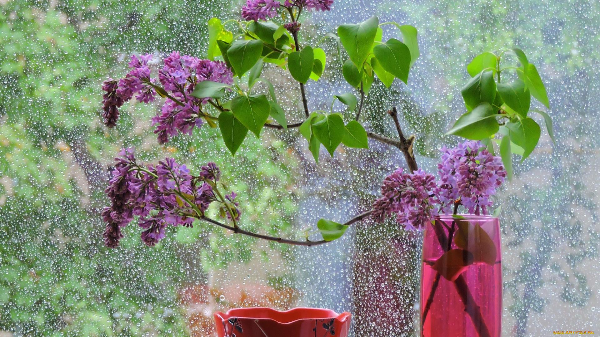 предмет доброе утро после дождя картинки выбрали лучшие