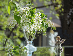 обоя цветы, Черемуха, красота, весна, черемуха, фото, свет, натюрморт, ангел
